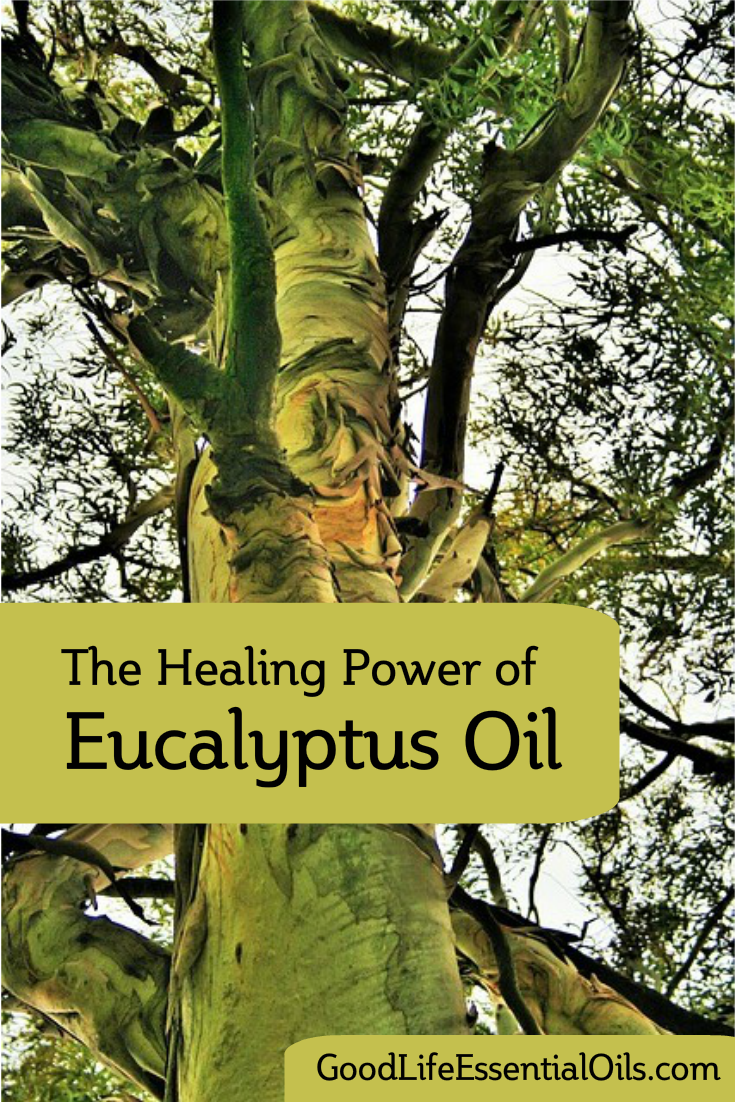 Healing Eucalyptus Oil