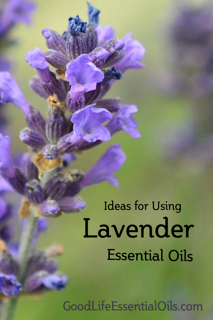 Using Lavender Essential Oils