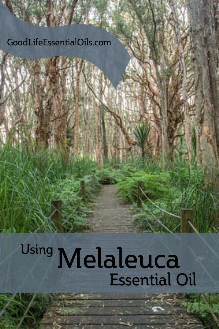Using Melaleuca