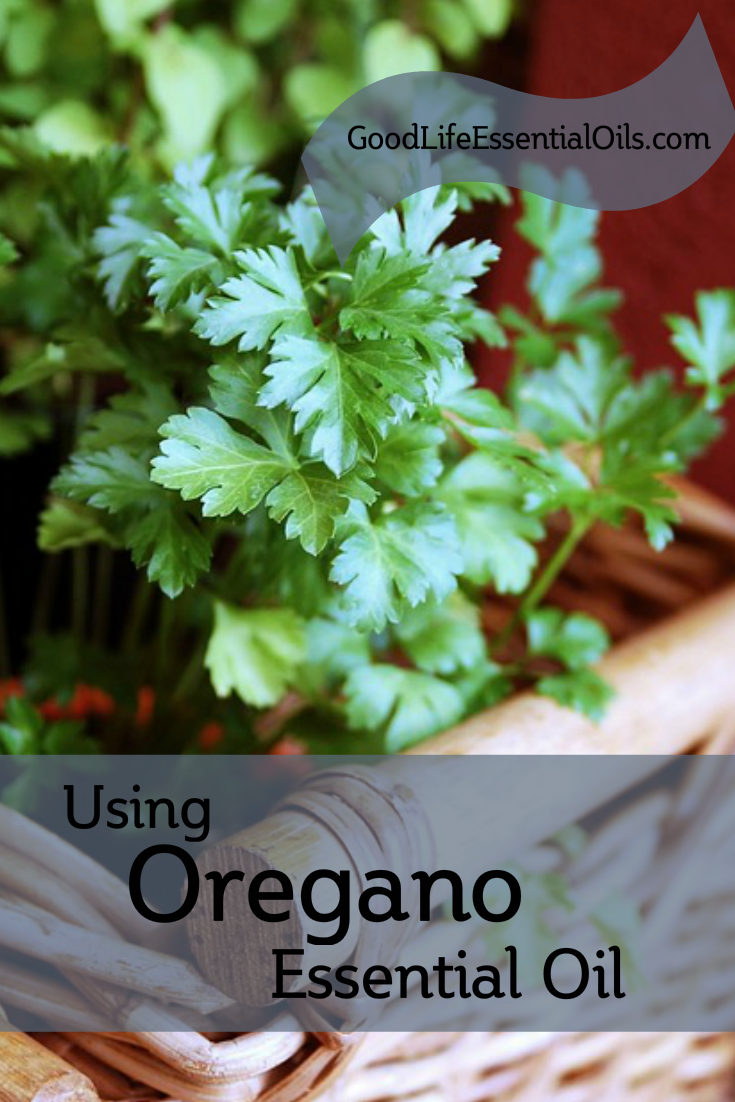 Using Oregano Essential Oils