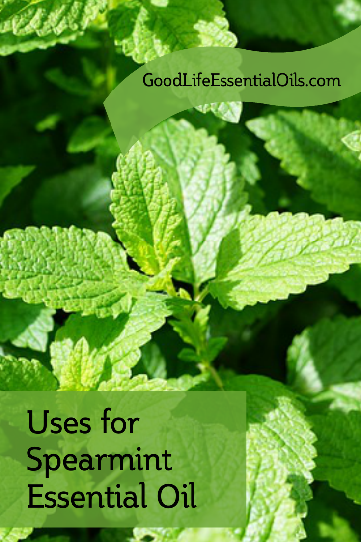 uses-for-spearmint-essential-oil